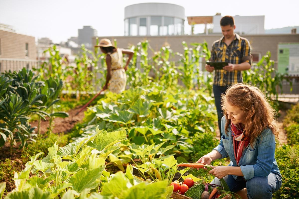 Urban Farming Technology   Growlink