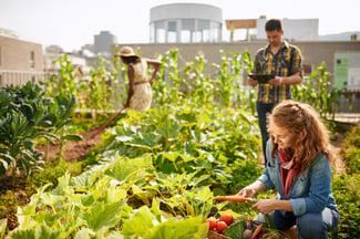 Urban Farming Technology | Growlink
