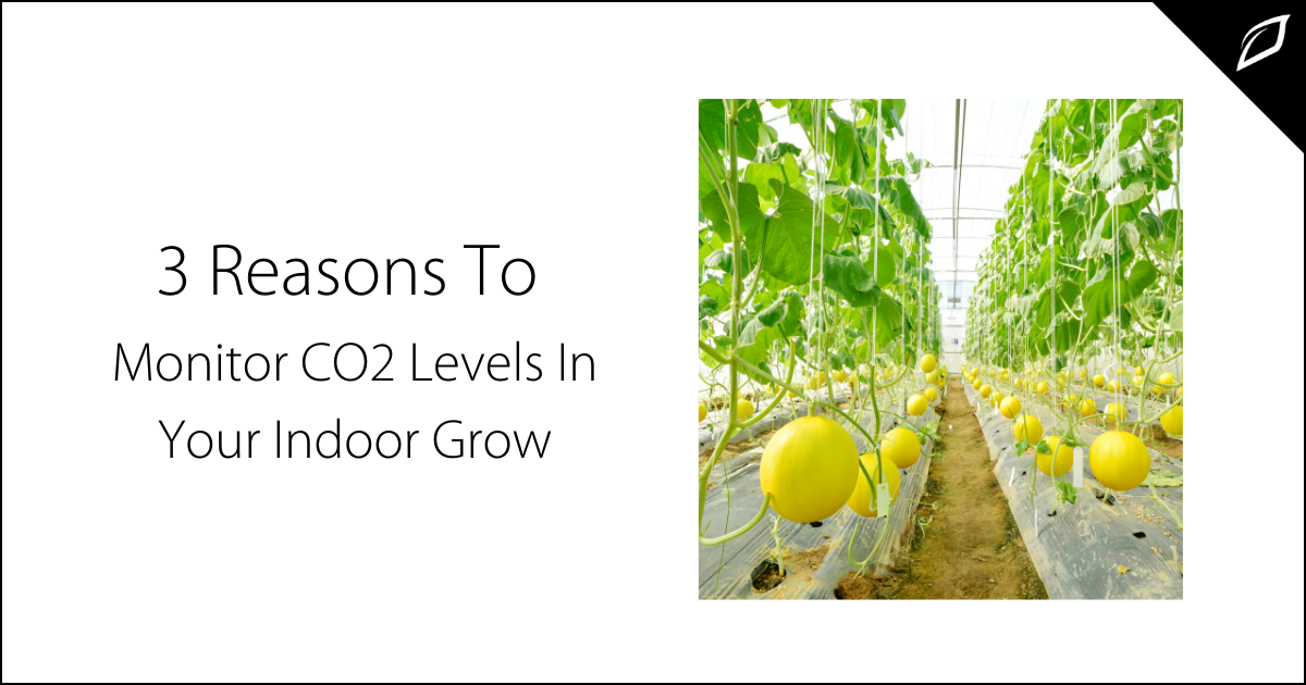 3 Reasons To Monitor CO2 Levels in Your Indoor Grow-2