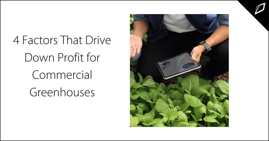 4 Factors That Drive Down Profit for Commercial Greenhouses