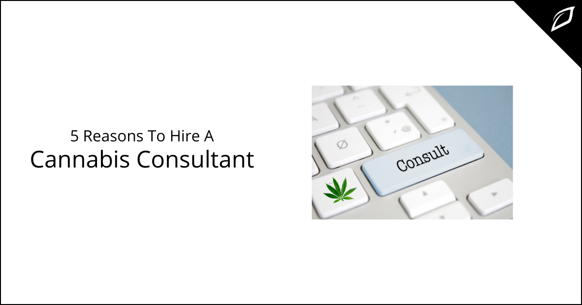 5 Reason To Hire A Cannabis Consultant
