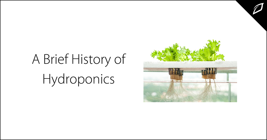 A Brief History of Hydroponics (1)