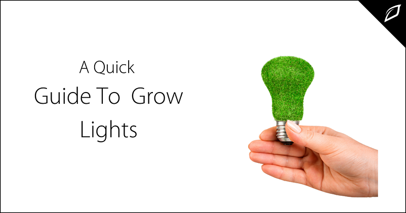 A Quick Guide To Grow Lights