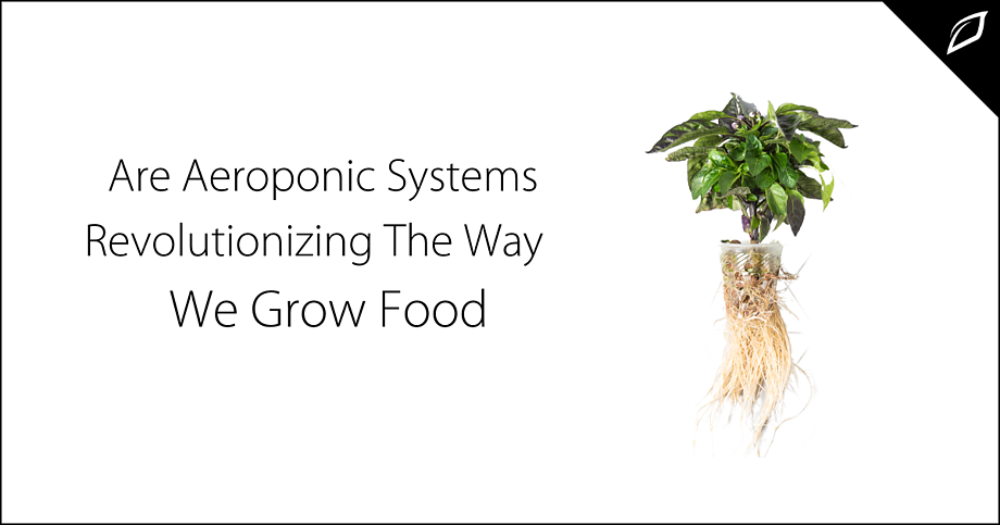 Are Aeroponic Systems Revolutionizing The Way We Grow Food