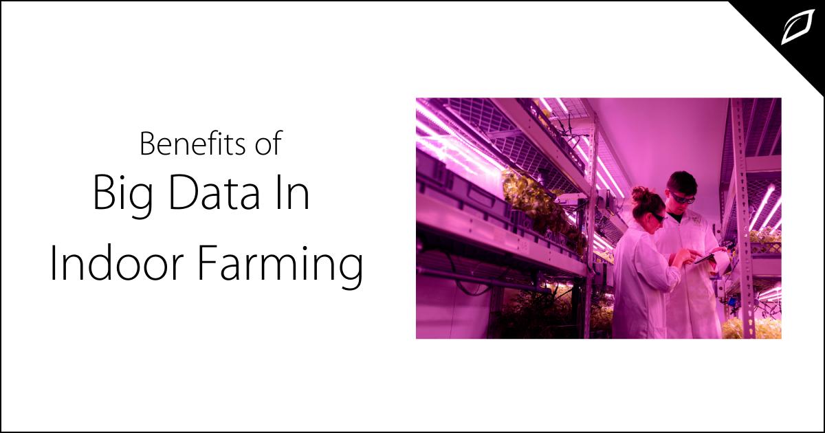 Benefits of Big Data In Indoor Farming