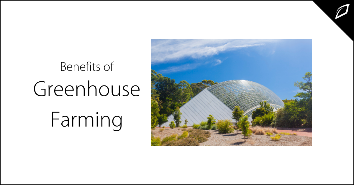 Benefits of Greenhouse Farming