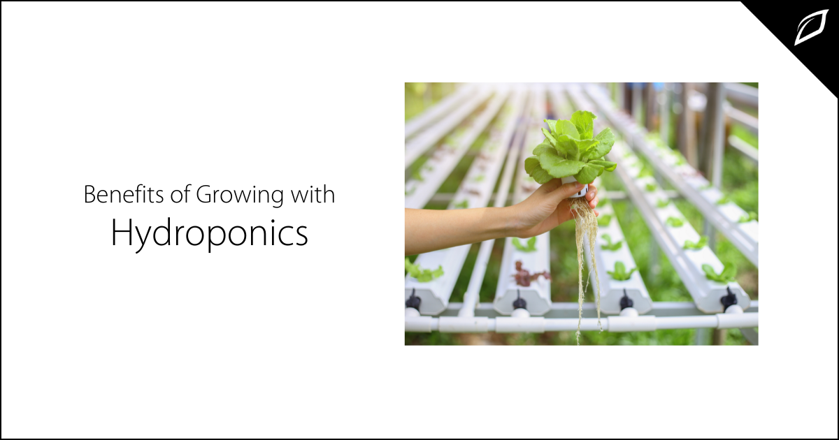 Benefits of Growing with Hydroponics