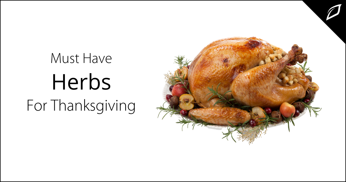 Must Have Herbs For Thanksgiving