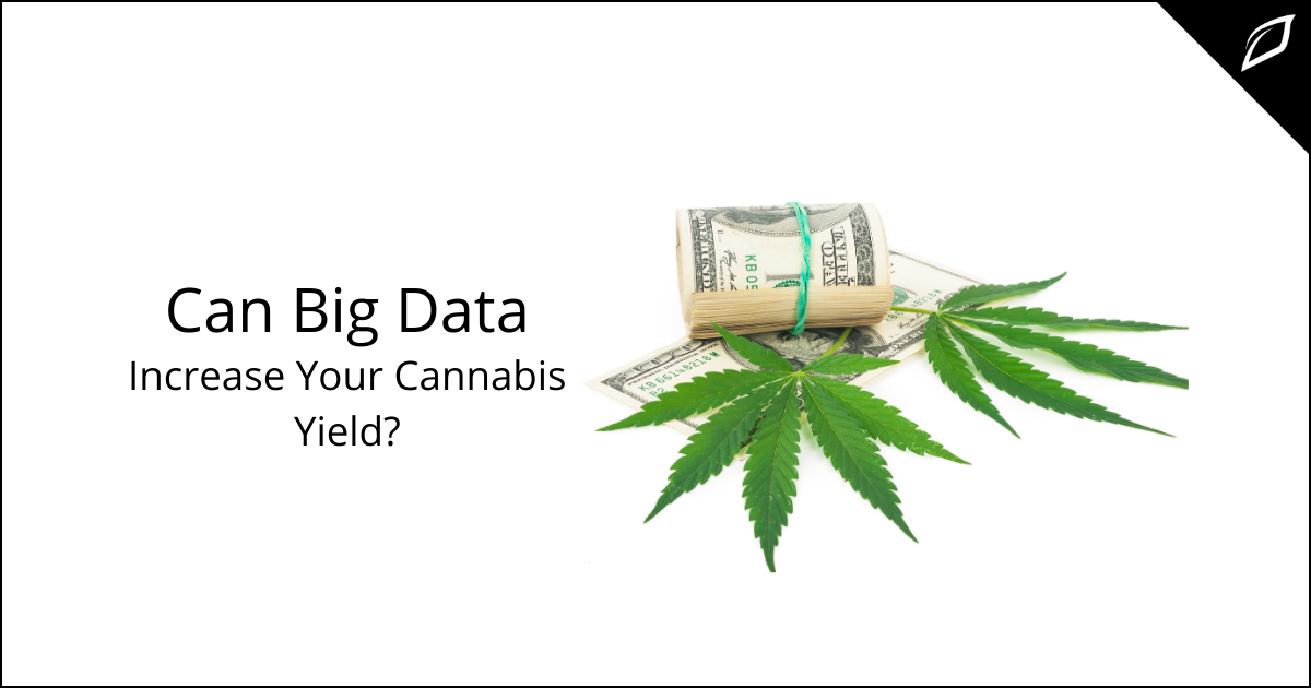 Can Big Data Increase Your Cannabis Yield_ (1)