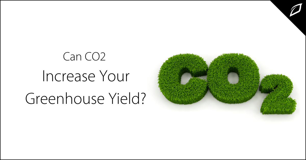 Can CO2 Increase Your Greenhouse Yield?