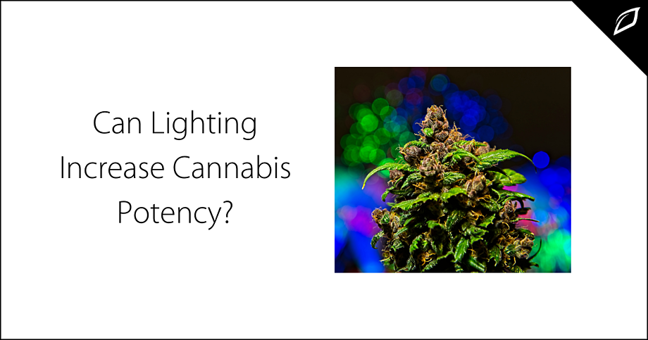 Can Lighting Increase Cannabis Potency-1