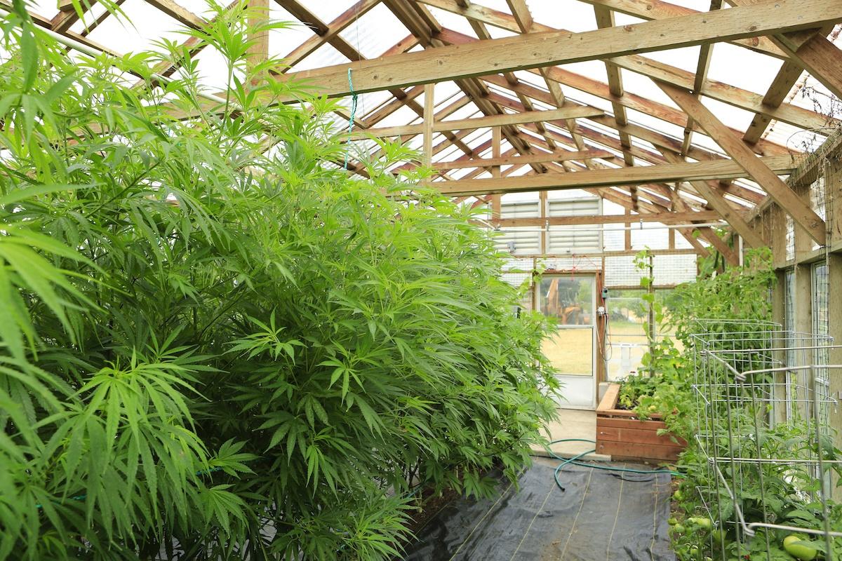 Cannabis Greenhouse Tools