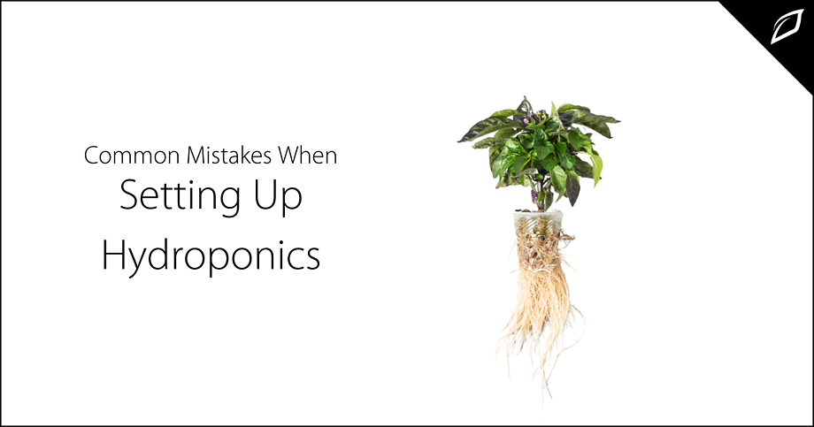 Common Mistakes When Setting Up Hydroponics 2