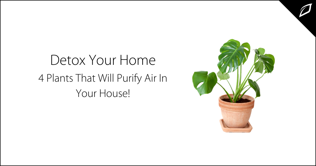 Detox Your Home-2