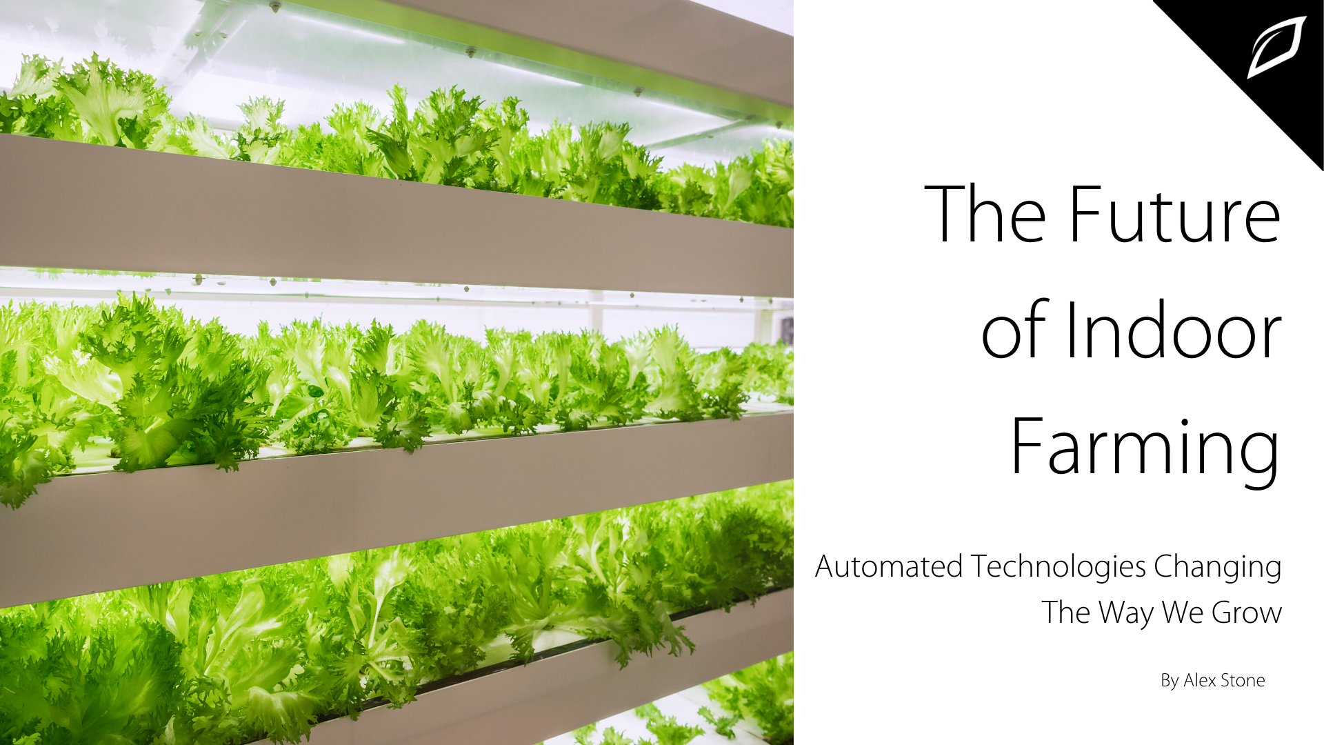 Future of Indoor Farming