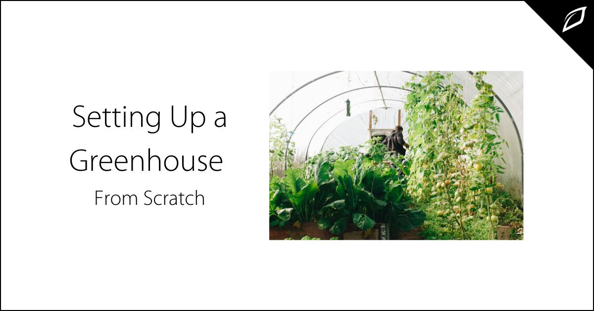 Greenhouse start