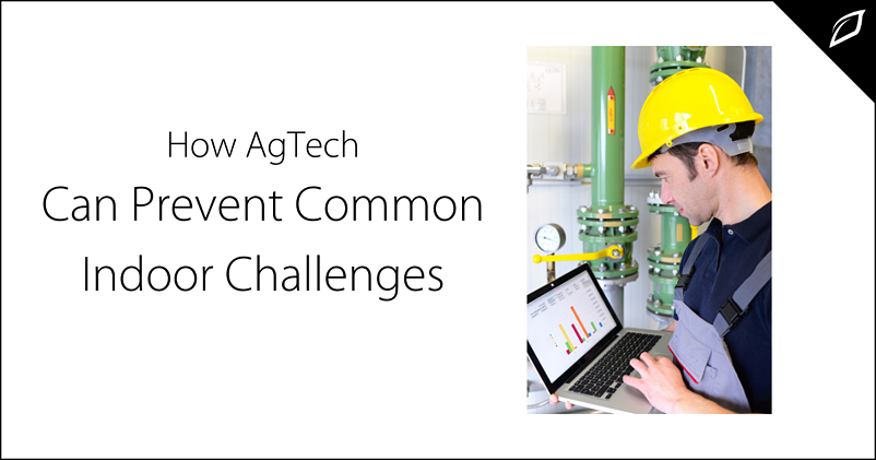 How AgTech Can Prevent Common Indoor Challenges