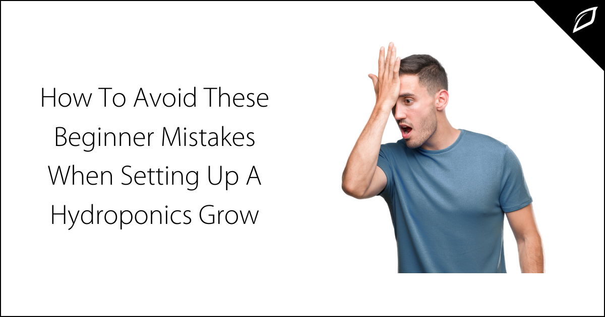How To Avoid These Beginner Mistakes When Setting Up A Hydroponics Grow