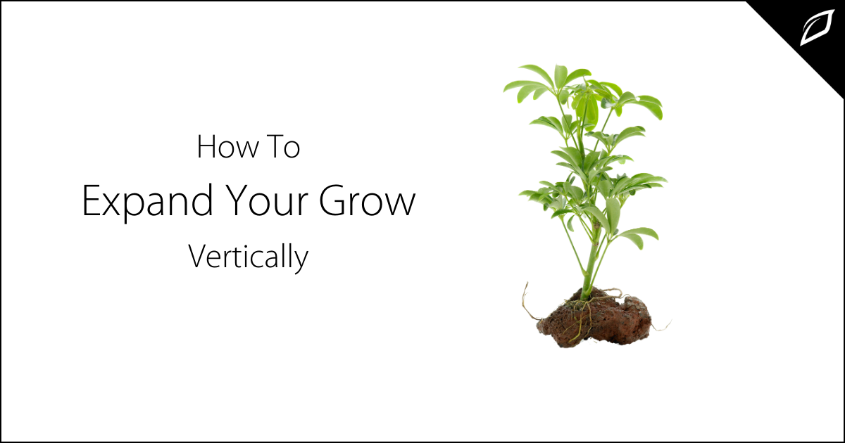 How To Expand Your Grow Vertically