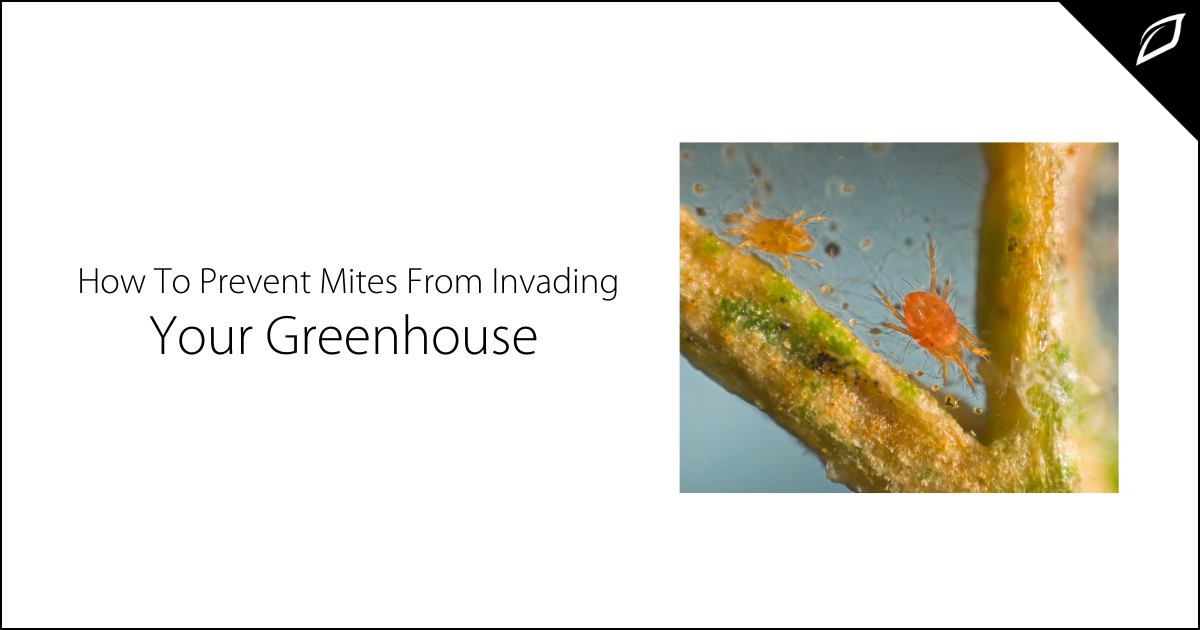 How To Prevent Mites From Invading Your Greenhouse