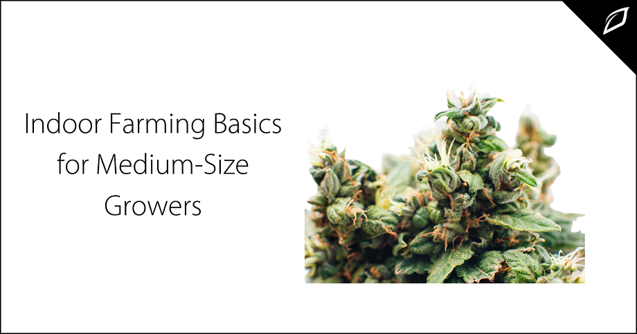 Indoor Farming Basics for Medium-Size Growers-2