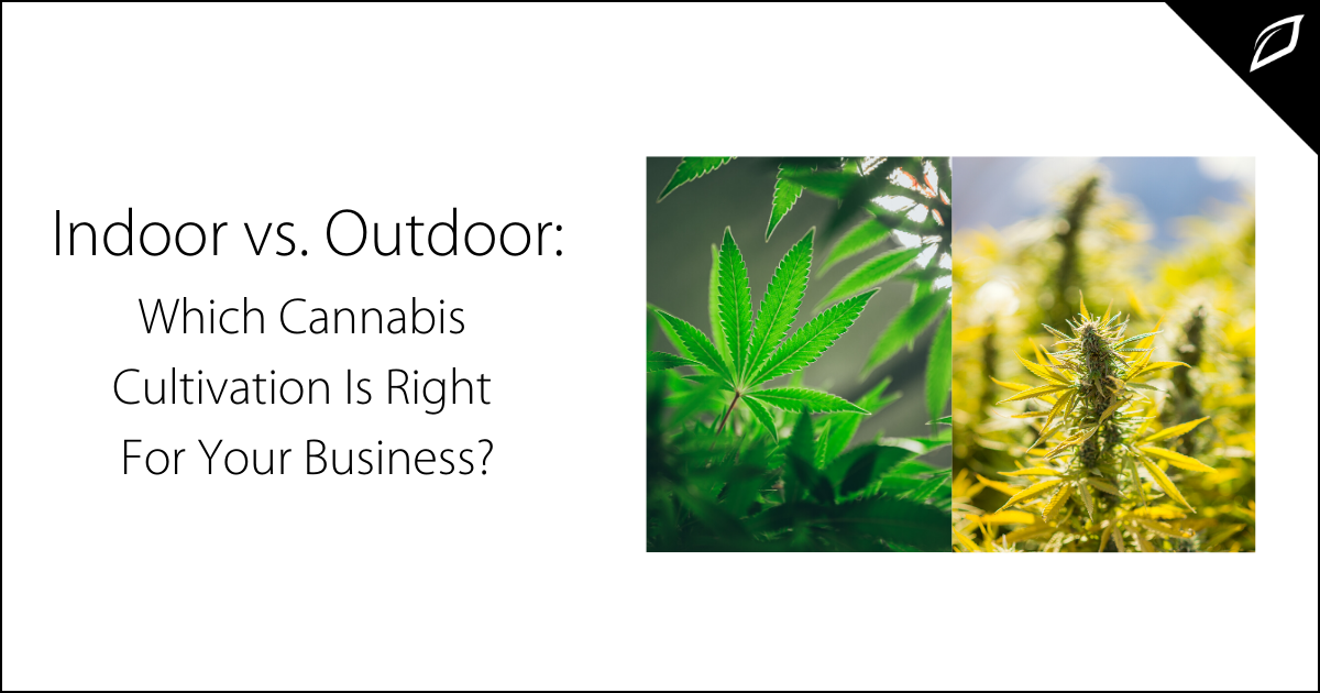 Indoor vs. Outdoor_ Which Cannabis Cultivation Is Right For Your Business?