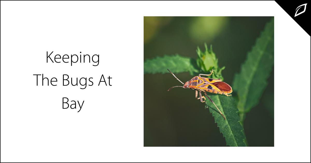 Keeping The Bugs At Bay