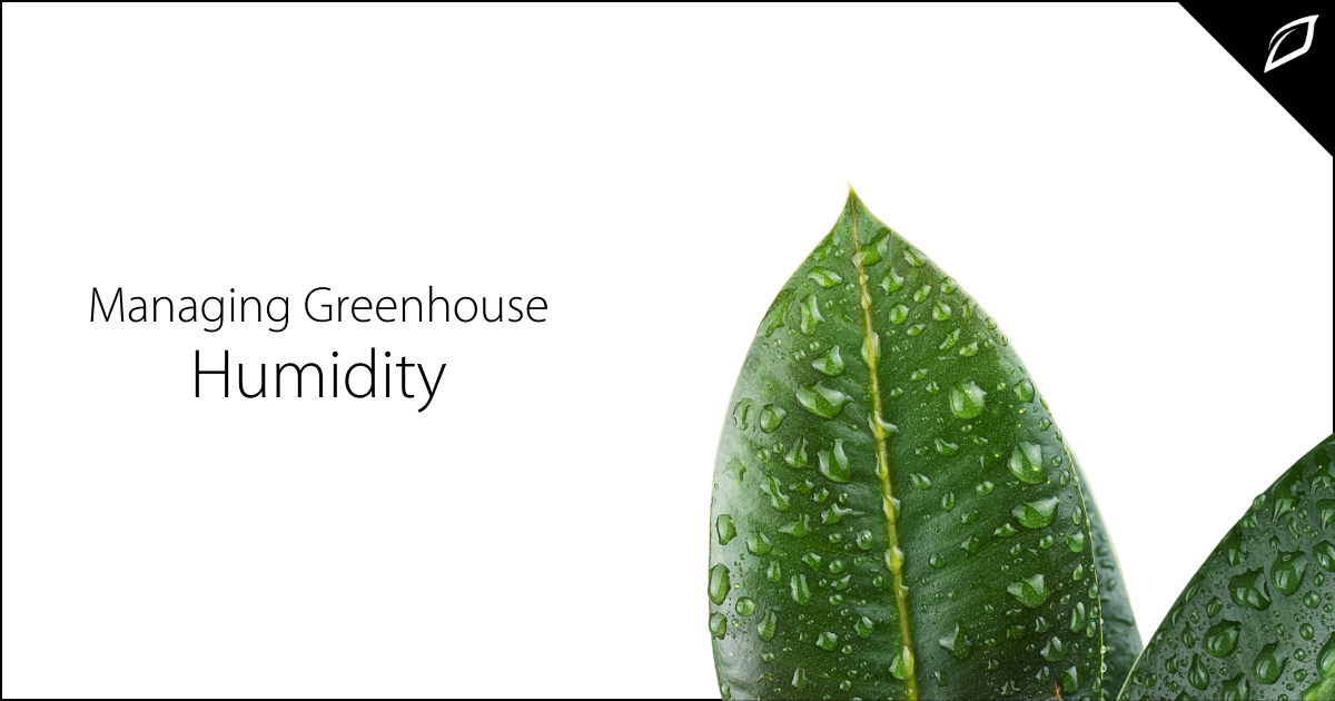 Managing Greenhouse Humidty
