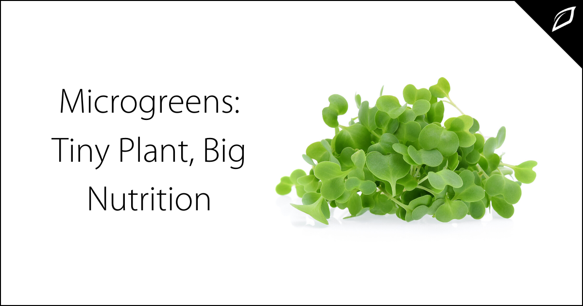 Microgreens_ Tiny Plant, Big Nutrition