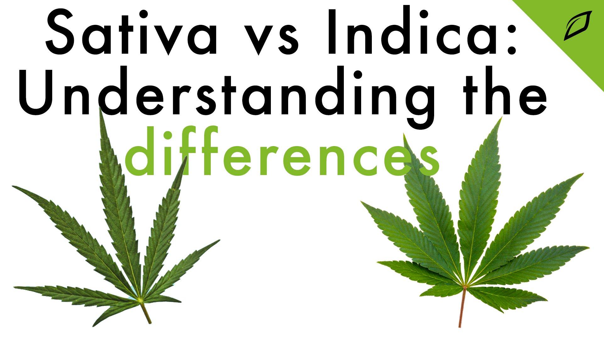 Sativa Vs Indica Blog 16x9