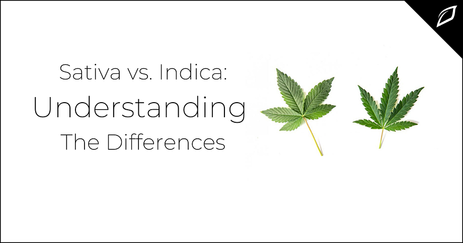 Sativa vs. Indica_ Understanding The Differences