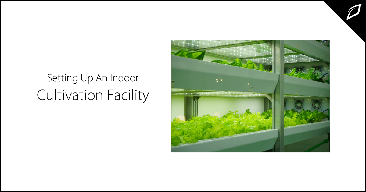 Setting Up An INdoor Cultivation Facility-1