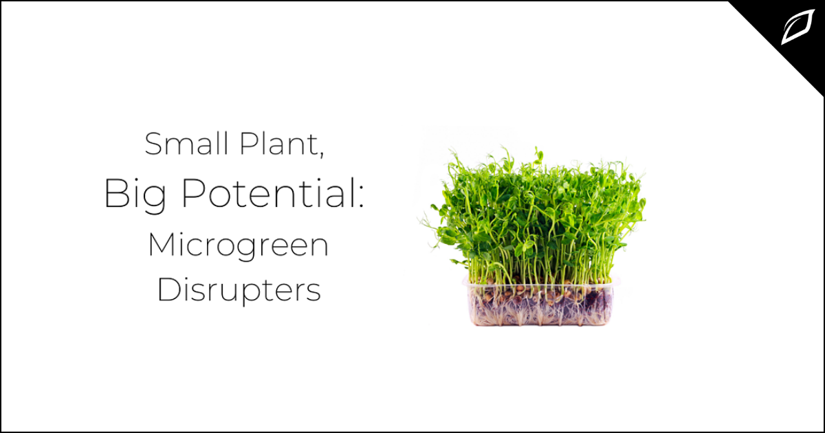 Small Plant, Big Potential_ Microgreen Distrupters