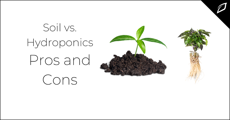 Soil vs. Hydroponics Pros and Cons