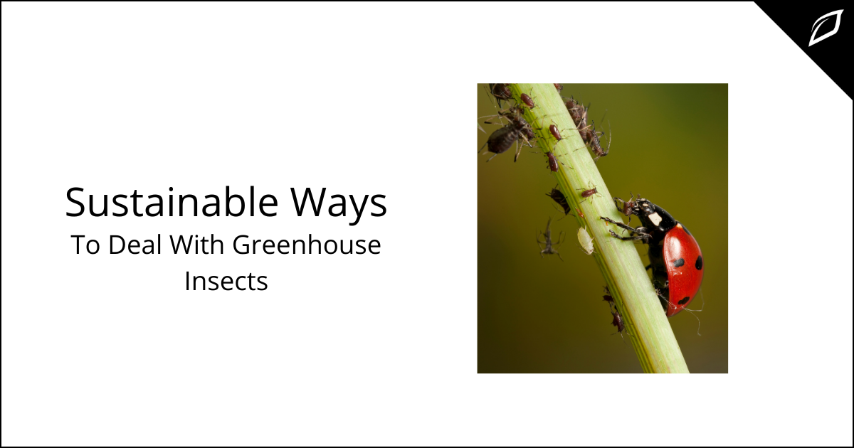 Sustainable Ways To Deal With Greenhouse Insects