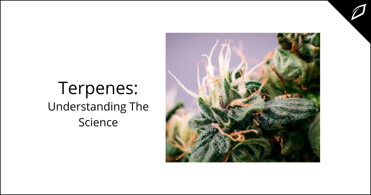 Terpenes - Understanding the Science