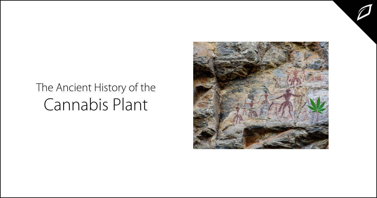 The Ancient History of the Cannabis Plant