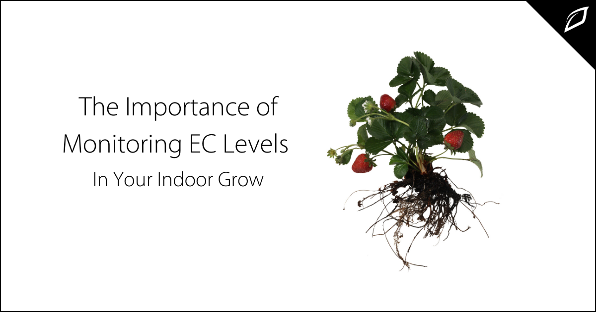 The Importance of Monitoring EC Levels In Your Indoor Grow