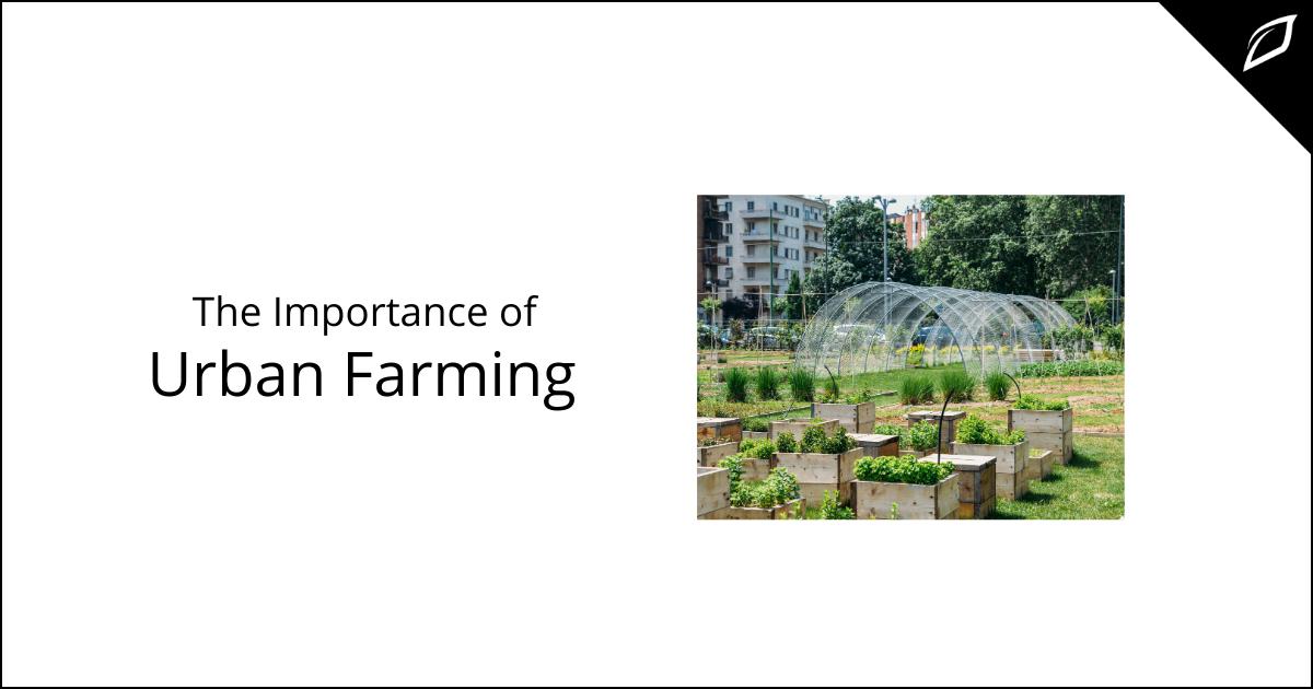 The Importance of Urban Farming
