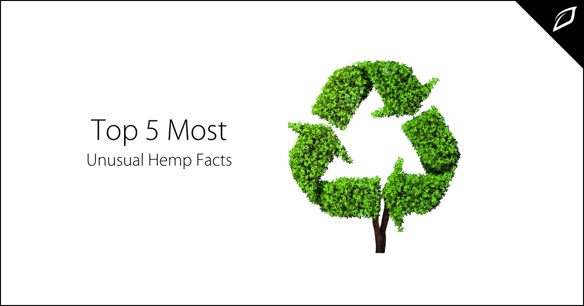 Top 5 Most Unusual Hemp Facts