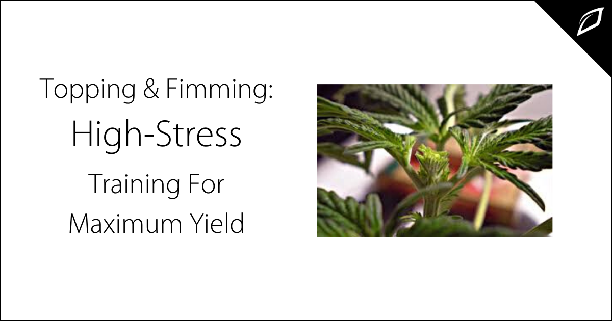 Topping And Fimming_ High-Stress Training For Maximum Yield