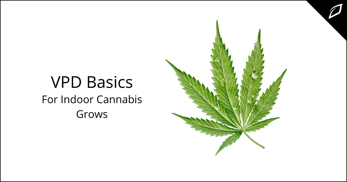 VPD Basics For Indoor Cannabis Grows