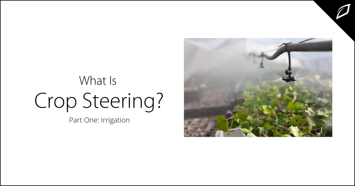 What is Crop Steering_ Part One