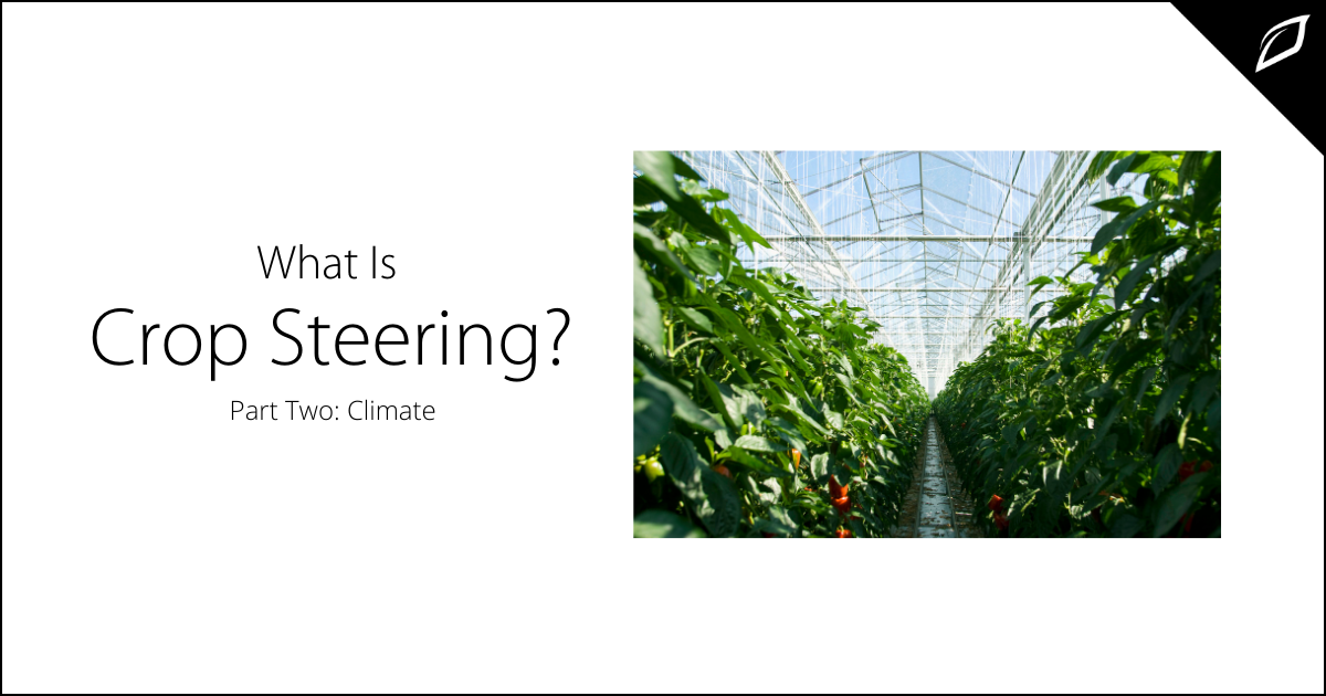 What is Crop Steering_ Part Two Climate