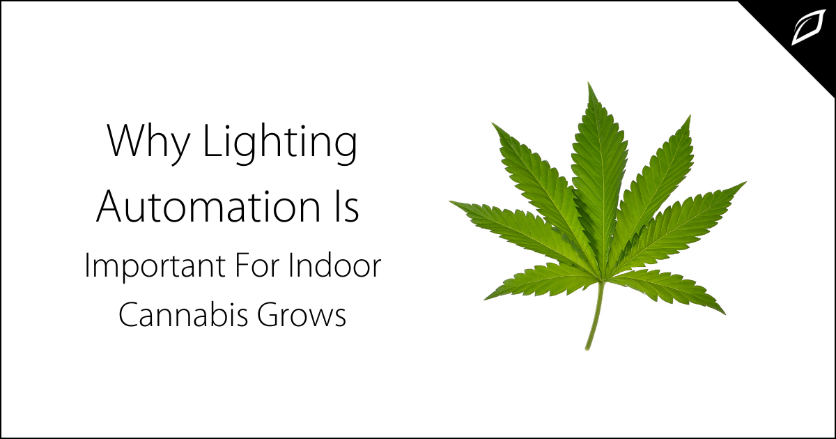 Why Lighting Automation Is Important For Indoor Cannabis Grows