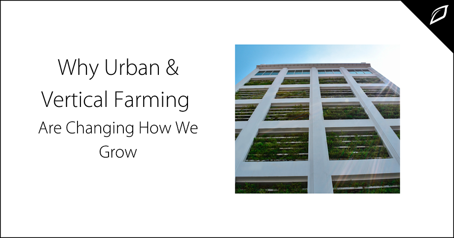Why Urban & Vertical Farming Are changing How We Grow