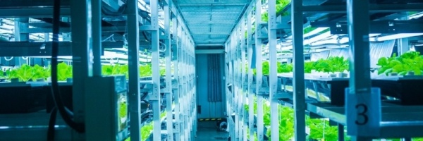 vertical_container_farming-email-036330-edited