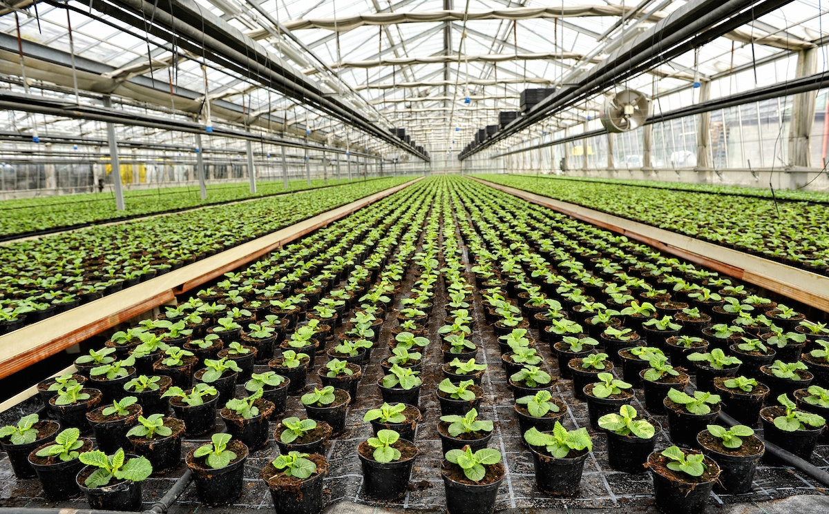 Commercial Greenhouse Technology