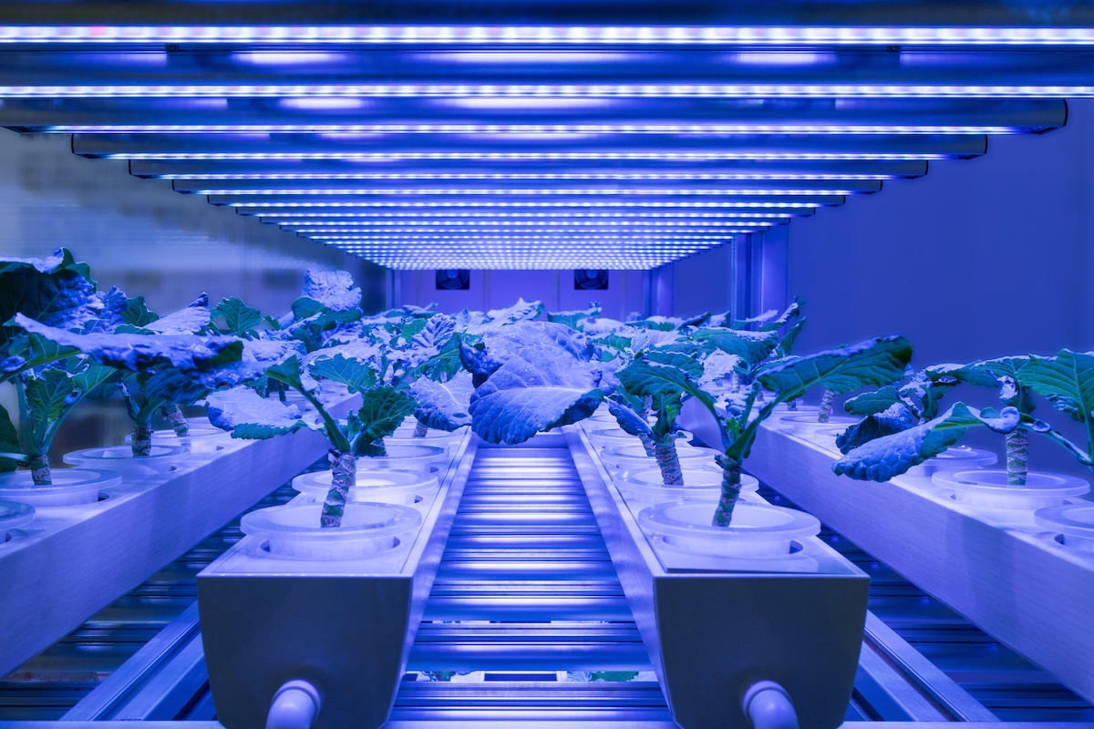 Wireless IOT Hydroponics | Growlink