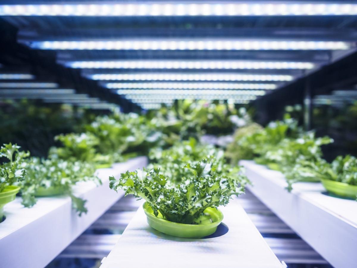 Hydroponics Automation | Growlink